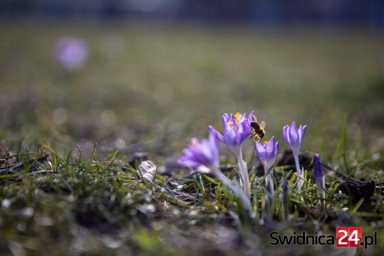 Pierwsze oznaki wiosny na fotografiach [KONKURS]