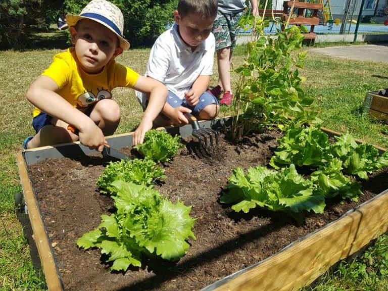 Przedszkolaki uprawiają warzywa